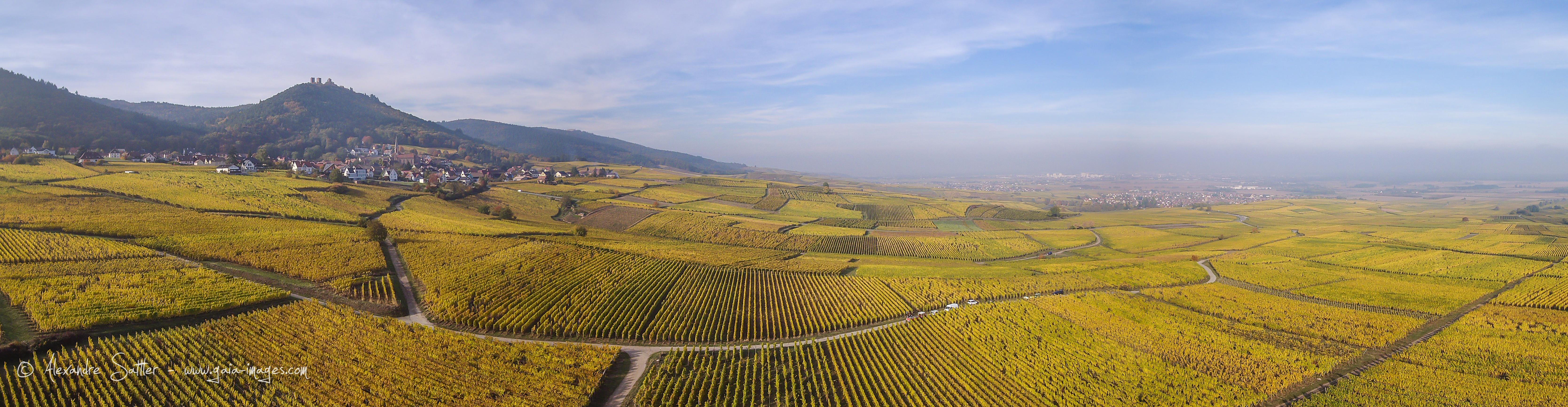 Vignoble Alsacien